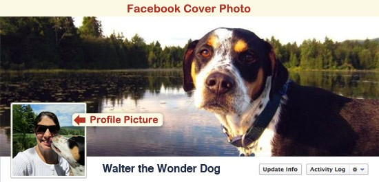 Walter the Wonder Dog's Facebook Cover Photo