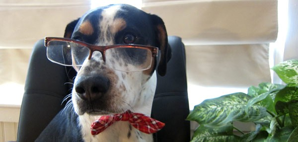Twitter humor - dog with glasses