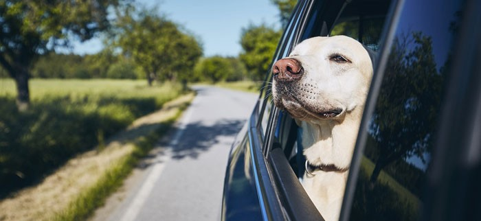 veterinary clinic drop-off appointment during pandemic